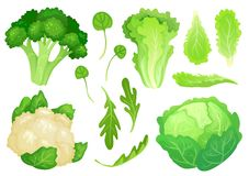 Cartoon cabbages. Fresh lettuce leaves, vegetarian diet salad and healthy garden green cabbage. Cauliflower head vector. Cartoon cabbages. Fresh lettuce leaves royalty free illustration