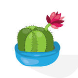 Cartoon cactus desert. Flat vector illustration. Green blooming cactus on white background Royalty Free Stock Image