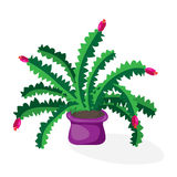 Cartoon cactus desert. Flat vector illustration. Green blooming cactus on white background Stock Images