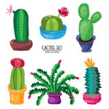 Cartoon cactus desert set. Flat vector illustration. Green blooming cactuses on white background Stock Image