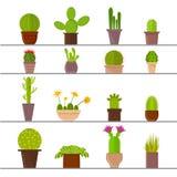 Cartoon Cactus Plant in Pots. Vector Royalty Free Stock Photo