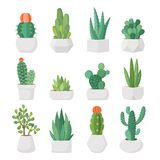 Cartoon cactus and succulents in pots vector set. Cartoon colorful cactus and succulents in pots vector set. Decirative flowers and plants. Isolated icons royalty free illustration