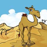 Cartoon Camel Stock Images