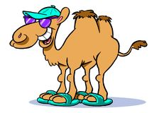 Cartoon camel caricature  Royalty Free Stock Image