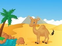 Cartoon camel with desert background Royalty Free Stock Image