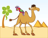 Cartoon camel and parrot. In front of pyramids Royalty Free Stock Images