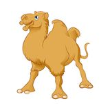 Cartoon Camel Royalty Free Stock Photo