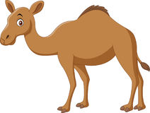 Cartoon camel  on white background Stock Images
