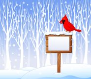 Cartoon cardinal bird on the blank sign with winter background Stock Photography