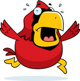 Cartoon Cardinal Panic Stock Images