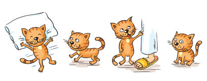 Cartoon cat. Character in different poses Royalty Free Stock Images