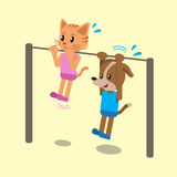 Cartoon cat and dog doing chin ups exercise together Stock Photos