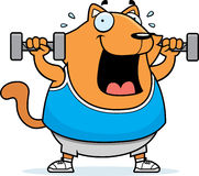 Cartoon Cat Dumbbells Royalty Free Stock Image