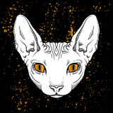 cartoon cat head with golden eyes jn black background Royalty Free Stock Images