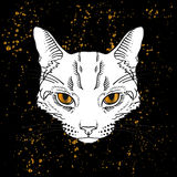 Cartoon cat head with golden eyes jn black background Royalty Free Stock Photos