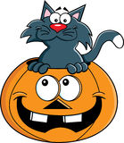 Cartoon cat inside a pumpkin Stock Images