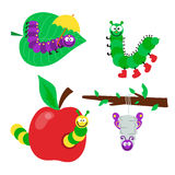 Cartoon caterpillar insect vector illustration. Element of fauna fun happy animal character graphic. Nature design colorful garden bug with many legs Royalty Free Stock Image