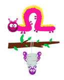 Cartoon caterpillar insect vector illustration. Element of fauna fun happy animal character graphic. Nature design colorful garden bug with many legs Stock Photography