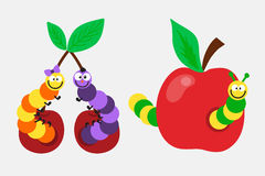 Cartoon caterpillar insect vector illustration. Element of fauna fun happy animal character graphic. Nature design colorful garden bug with many legs Royalty Free Stock Images