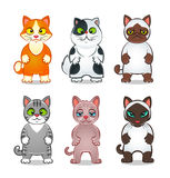 Cartoon cats. Collection of six cartoon different cats isolated Royalty Free Stock Images