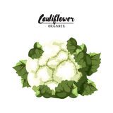 Cartoon cauliflower. Ripe green vegetable. Vegetarian delicious. Eco organic food.  Royalty Free Stock Photos
