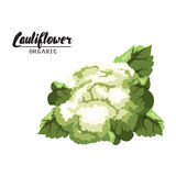 Cartoon cauliflower. Ripe green vegetable. Vegetarian delicious. Royalty Free Stock Photo