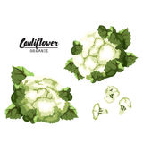 Cartoon cauliflower. Ripe green vegetable. Vegetarian delicious. Stock Photography