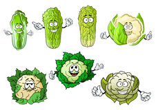 Cartoon cauliflowers and chinese сabbage. Funny cartoon cauliflower and chinese cabbage vegetables with hands,  on white background Royalty Free Stock Photo