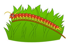 Cartoon centipede Royalty Free Stock Photo