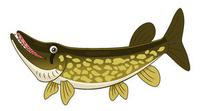 Cartoon chain pickerel Stock Photo