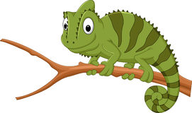 Cartoon chameleon on a branch. Illustration of Cartoon chameleon on a branch stock illustration