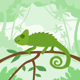 Cartoon Chameleon Green Jungle Forest Colorful Royalty Free Stock Images
