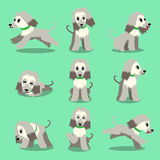 Cartoon character afghan hound dog poses set. For design Royalty Free Stock Photography