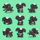 Cartoon character black maltese dog poses Royalty Free Stock Photo