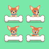 Cartoon character brown chihuahua dog with big bones Stock Images