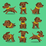 Cartoon character brown labrador dog poses. For design Royalty Free Stock Images