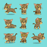 Cartoon character brown tabby cat poses. For design Stock Image