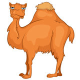 Cartoon Character Camel Stock Image
