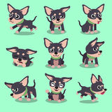 Cartoon character chihuahua dog poses. For design Stock Photos