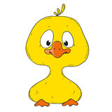 Cartoon character duckling. Duckling cartoon characters. The yellow small duckling Royalty Free Stock Photography