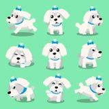 Cartoon character maltese dog poses