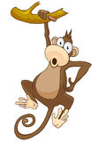 Cartoon Character Monkey Royalty Free Stock Image