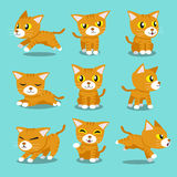 Cartoon character orange cat poses. For design Royalty Free Stock Photos