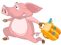 Cartoon Character Pig Royalty Free Stock Photo