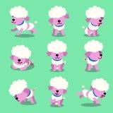 Cartoon character poodle dog poses set. For design vector illustration