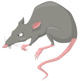Cartoon Character Rat Royalty Free Stock Images