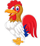 Cartoon chicken rooster posing. Illustration of Cartoon chicken rooster posing on  white background Stock Photography