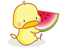 Cartoon chicks eating watermelon Royalty Free Stock Photo