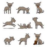 Cartoon chihuahua dog character Stock Photos