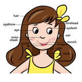 Cartoon child. Girl. Vocabulary of face parts Stock Images